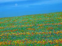 floriade field of flowers original painting
